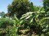 18c. Vegetacion en Inan Itah