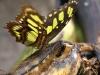 19. Mariposa en ometepe