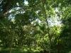 30. El bosque comestible de Bonafide