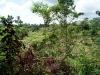 15 Terreno Iguana Chocolate