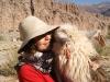 08-caravana-llamas-tilcara
