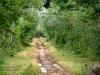 02 Camino al cenote