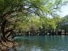 Árboles rodeando el lago