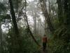 04b bosque de niebla