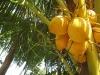 17. cocos en Genesis eco retreat