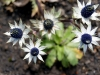 10-Flora-VOlcan-Irazu