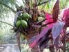 04. Vegetacion tropical