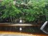 06. Ale cruzando el rio