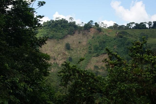 04 Deforestacion en Mastatal