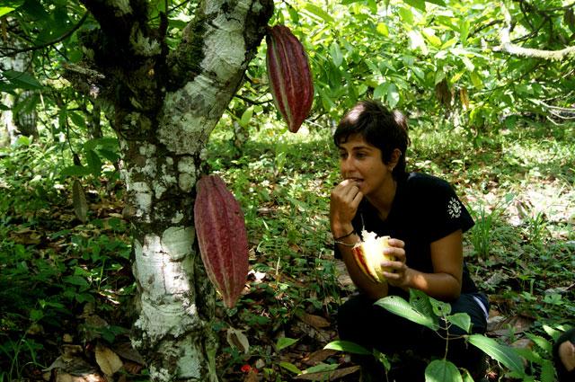 11 Probando el cacao fresco