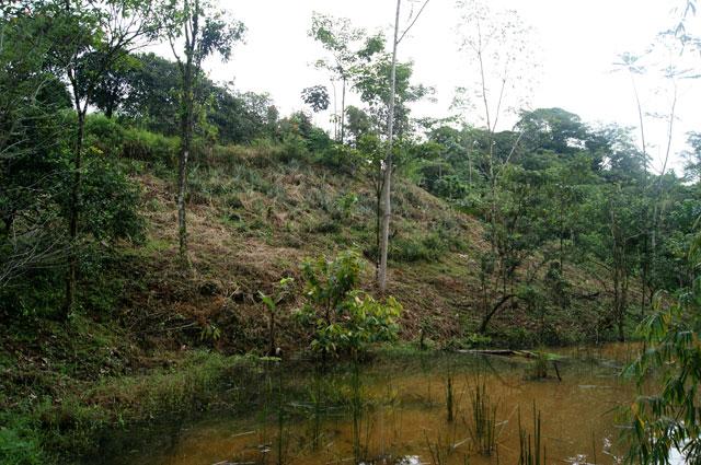 29 Humedal Iguana Chocolate