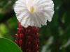 15-Flor-Montezuma