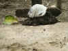 20-Cementerio-Isla-Cabuya