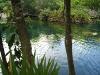 14 Cenote El jardin del eden