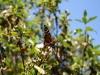 Mariposa monarca en flor
