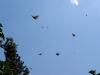 Cielo lleno de mariposas monarca