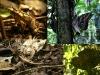 16-Madidi-Jungle-Lodge