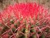 24. Cactus