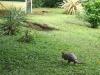 16.armadillo-visitante