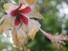 18.arana-en-flor