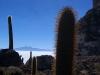 18.Cardones.Isla.Inca.Huasi