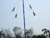 04. Voladores de Papantla