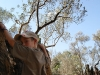 Ilán trepando un olivo