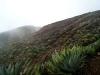 11 Agaves en el volcan Santa Ana