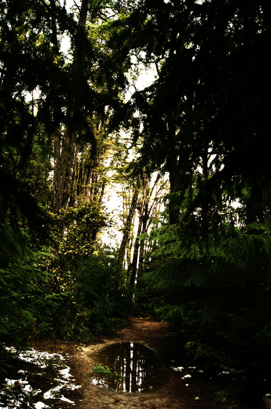 Sendero en Bahia Manzano